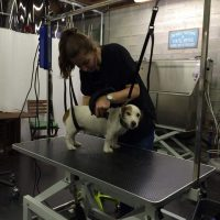 Hondenkapsalon