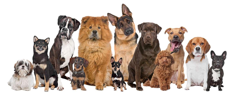 Hondenkapsalon koda